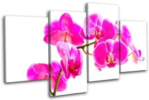Orchid Flowers Floral - 13-1117(00B)-MP04-LO